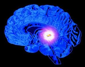 pineal_gland_2