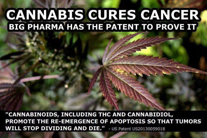 Cannabis-Cancer